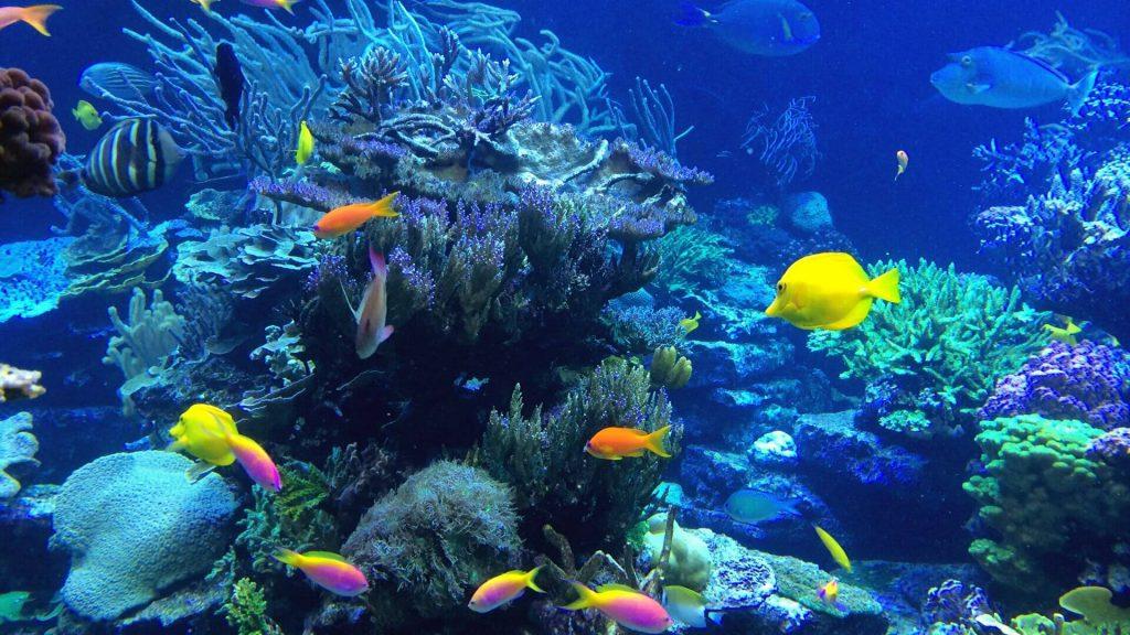 Best Dive Sites Around Nusa Lembongan - COLOURFUL FISH - NUSA PENIDA