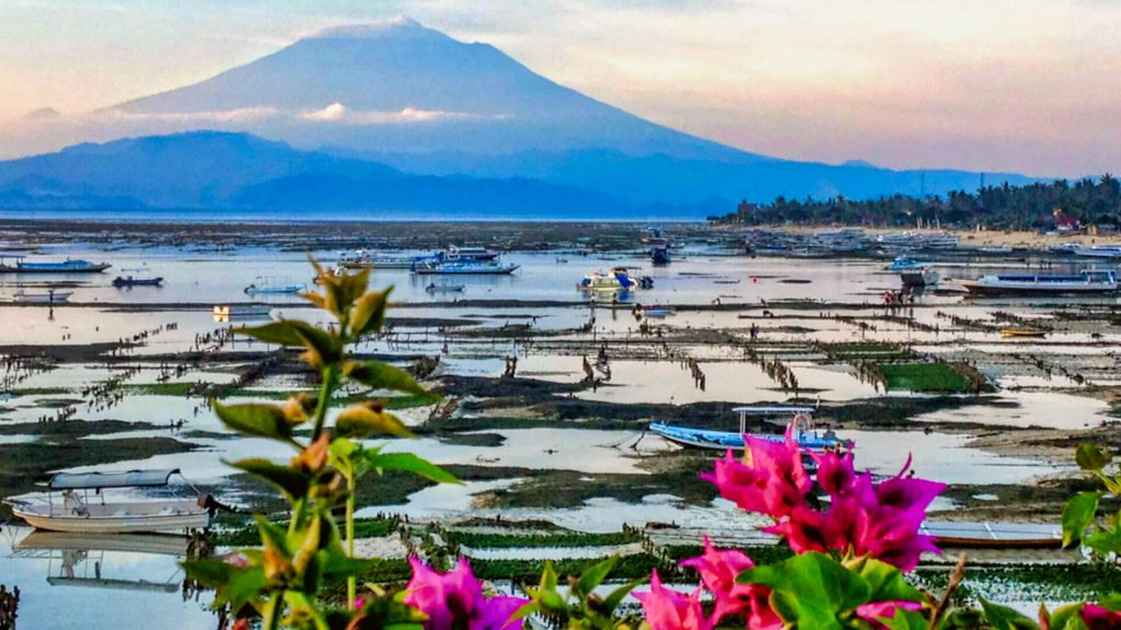 One of the Top 10 things to do and see on Nusa Lembongan - SEAWEED FARMING