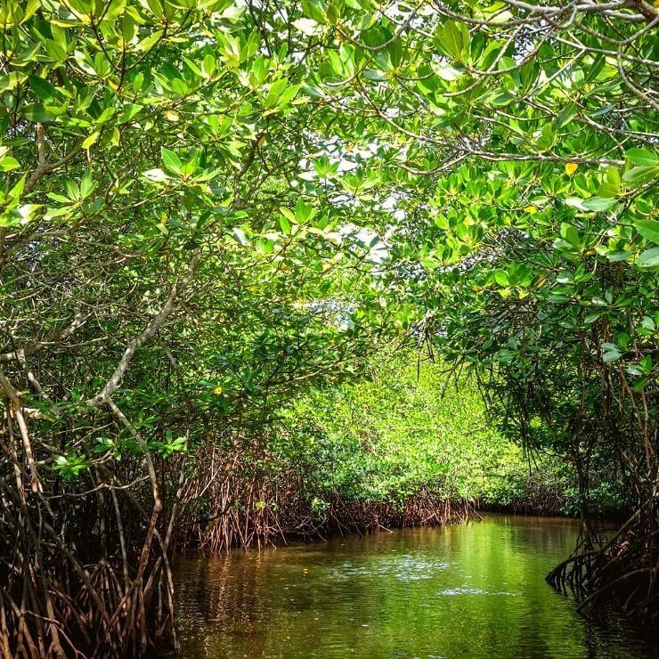 VISITING THE MANGROVE FOREST IS ONE OF THE Top 10 Things To Do and See on Nusa Lembongan
