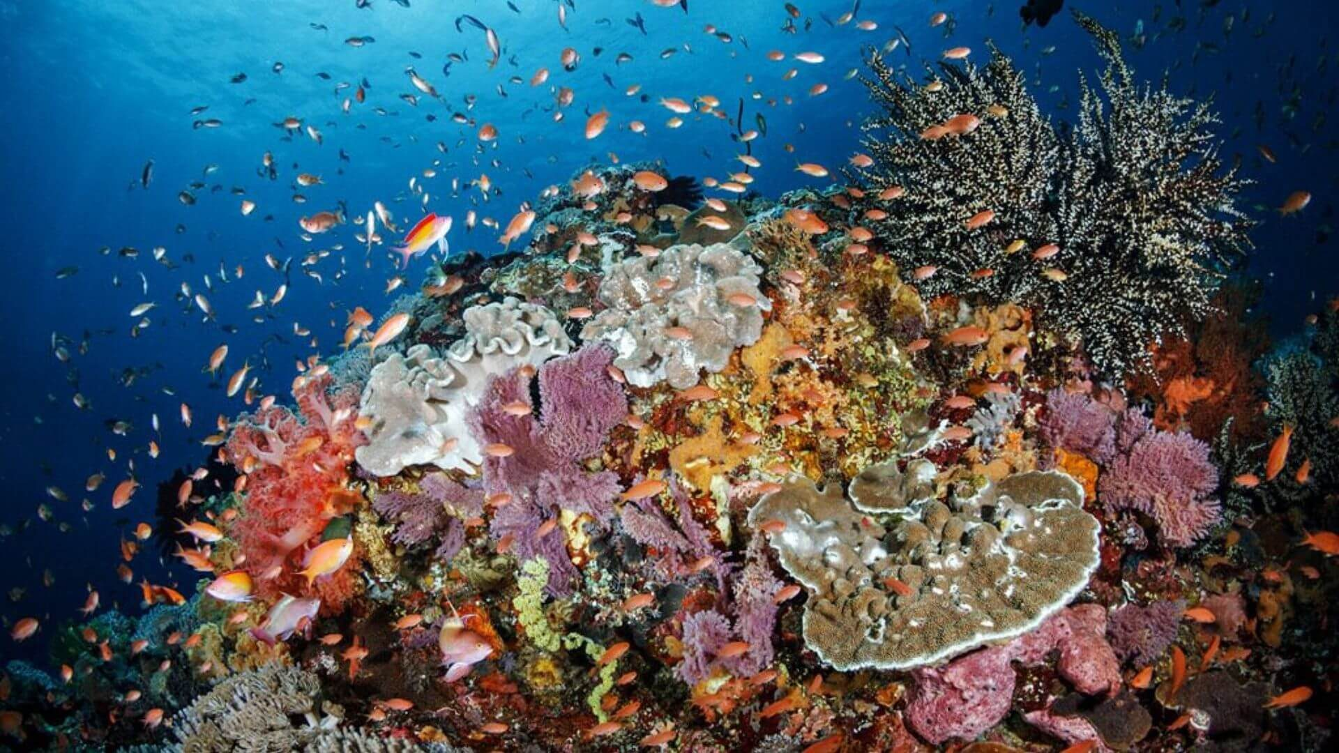 DISCOVER THE BEST DIVE SITES AT NUSA LEMBONGAN AND NUSA PENIDA, BALI - CORAL REEF AND COLOURFUL FISH